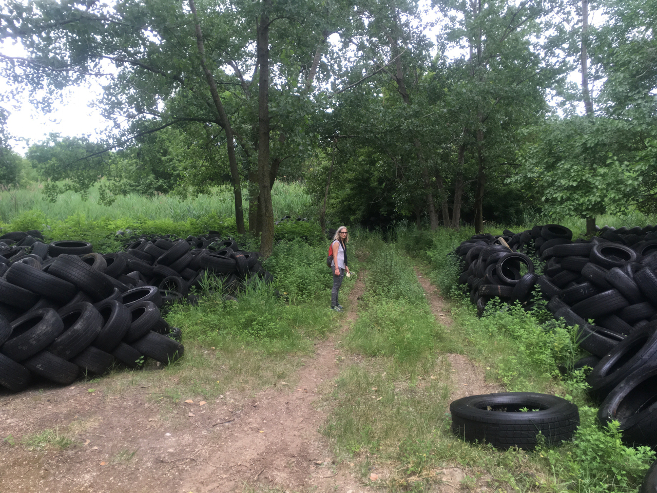 author in a field of tires