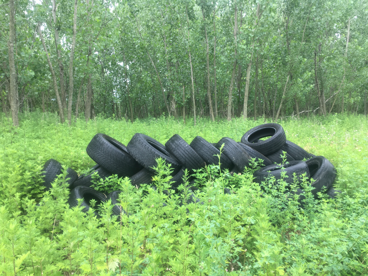 tires dumped in Eastwick woods