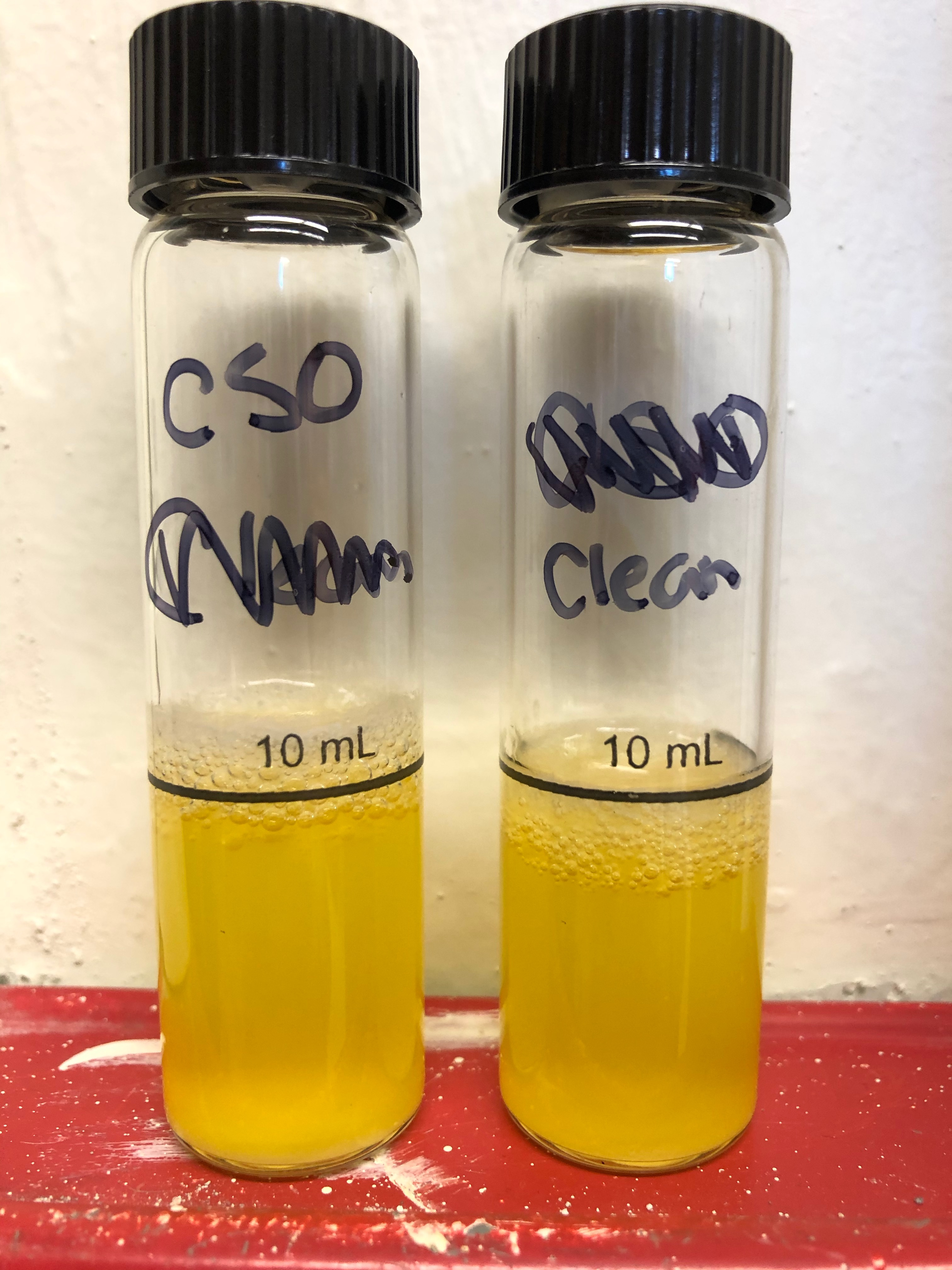Combined sewer outflow (left) and upstream samples (right) both tested positive (yellow) for the presence and growth of fecal coliform bacteria.