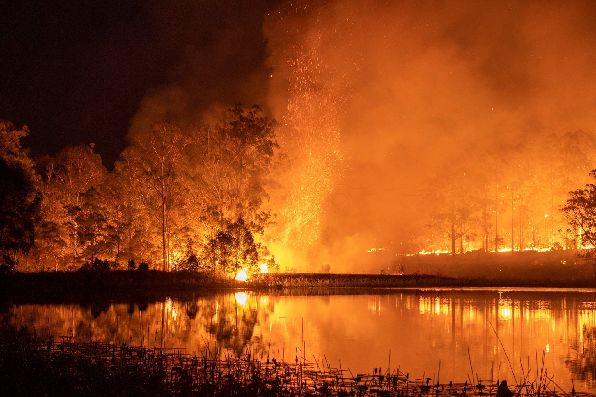 trees and water illuminated by wildfire in New South Wales