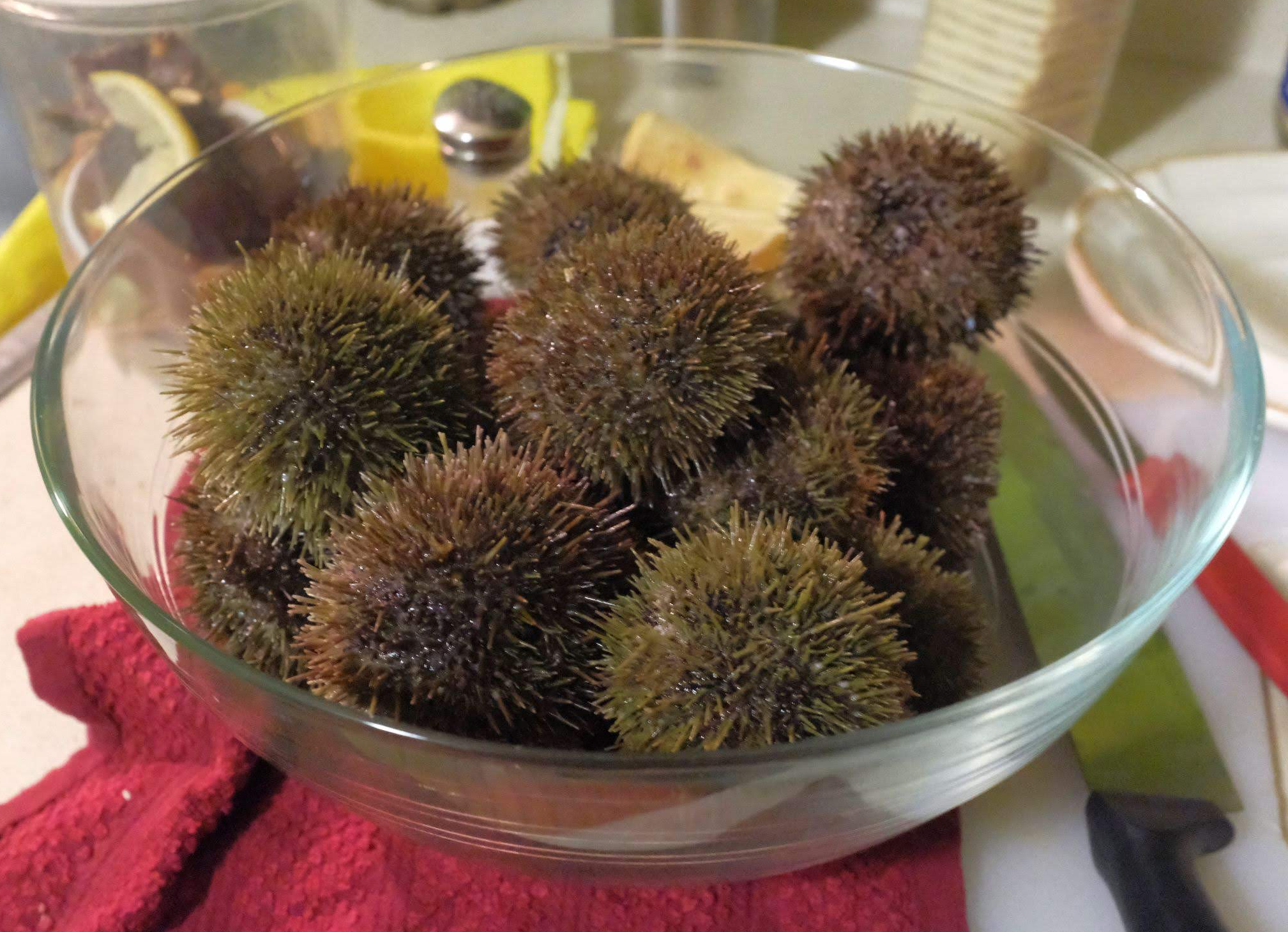 A pile of sea urchins in a glass bowl