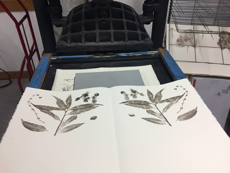 botanical photo on printing press