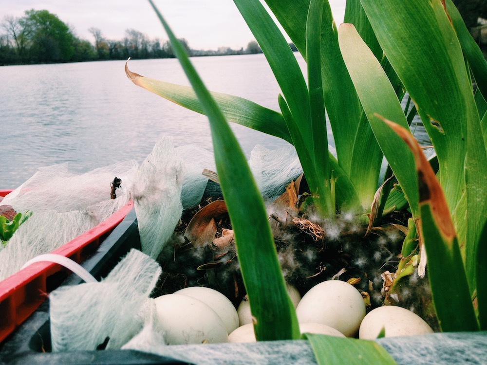 bird eggs next to the Schuylkill River