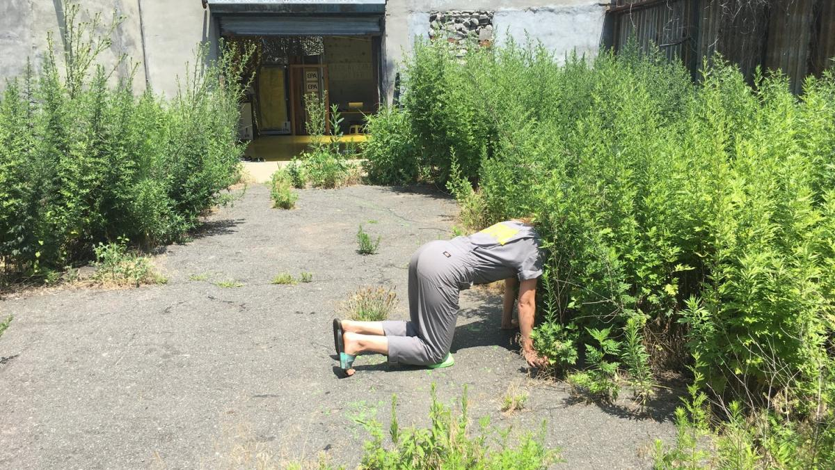 Embodied scientist exploration at Environmental Performance Agency Headquarters, Crown Heights, Brooklyn, July 2017. Photo credit Catherine Grau/Environmental Performance Agency    The Environmental Performance Agency (EPA) is an artist collective using artistic, social, and embodied / kinesthetic practices to advocate for the agency of all living performers co-creating our environment, specifically through the lens of spontaneous urban plants, native or migrant.  Catherine Grau is a New York based artist