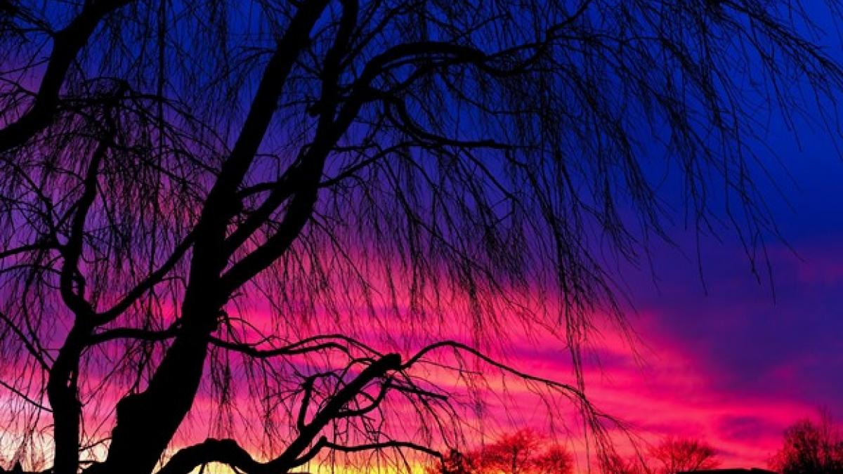 photo of a blue, pink, and yellow sunset with trees in silhouette in the foreground