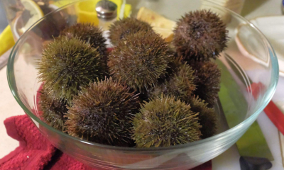 pile of urchins in a glass bowl