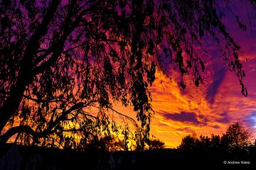 orange, red, and purple sunset with a tree silhouette in the foreground