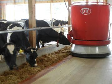 Cows fed haylage with a robot feeder. Lancaster County, Pennsylvania, 2014.