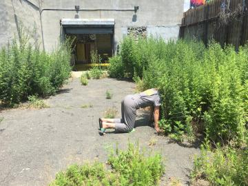 Embodied scientist exploration at Environmental Performance Agency Headquarters, Crown Heights, Brooklyn, July 2017. Photo credit Catherine Grau/Environmental Performance Agency