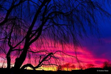gorgeous blue, pink, yellow sunset by photographer Andrew Niess